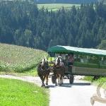 bayrischer_wald_5_20091025_1863247560